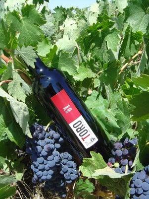 Regiones vitivinícolas: Toro (I)