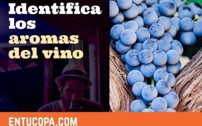 Identifica los aromas del vino