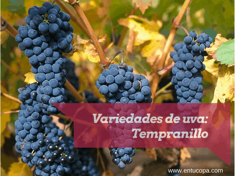 Variedades de uva: Tempranillo