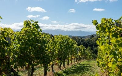 Curso de cata de vinos (II). Tipos de vinos